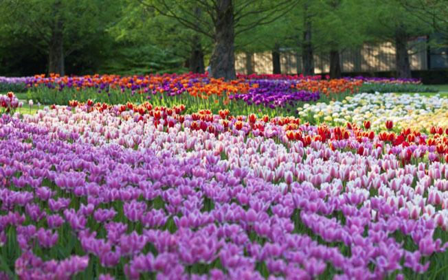 Primavera exige cuidados com a qualidade do ar