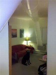 Com essa ideia até o cachorro se surpreendeu.