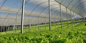Conheça as estufas e como a climatização pode afetar a vegetação