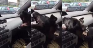 Humor: Sim, os animais também amam ar-condicionado!