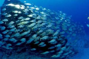 Estudo diz que aquecimento global poderá afetar os oceanos de forma irreversível