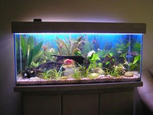 Climatização adequada do aquário é fundamental para os peixes